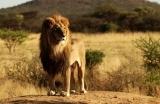 Afrika_Aslan-1548147756.jpg