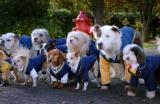 pup-academy-1593676752.jpg