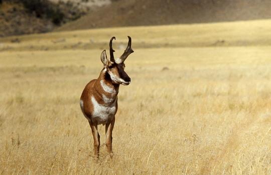 african-antelope_lisste-1553067031.jpg