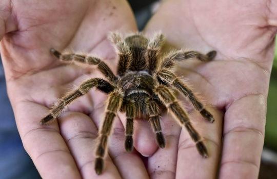 tarantula-1557491704.jpg