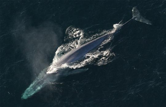whale-lisste-1553173454.jpg